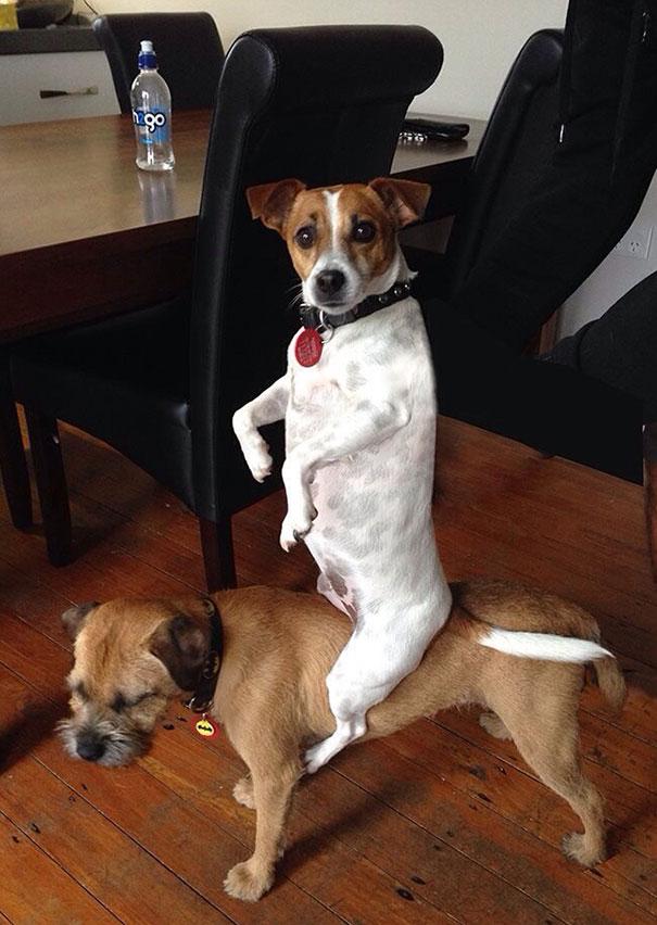 funny-dogs-acting-weird-167-59438edd2cf37__605